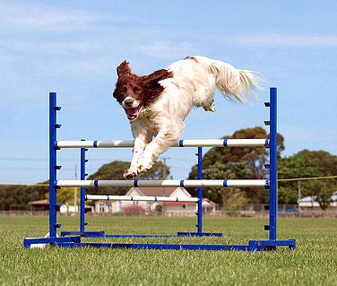 Auf einem Agility Parcour sollten Hundeführer und Hund ständigen Kontakt zueinander haben.