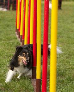 In Deutschland gibt es viele Hundesportplätze mit einem speziellen Agility Parcour.