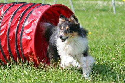 Neben dem Agility Traning gibt auch noch zahlreiche andere Hundesportarten.