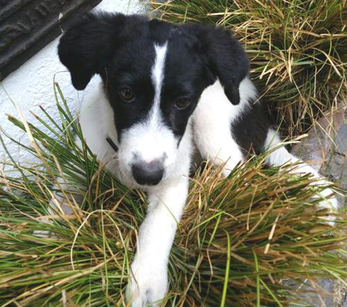 Will man einen Hund in Not erwerben, so sollte man die Zustände im Tierheim vorher genau prüfen.