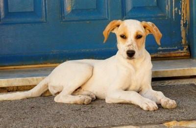 Alle Tierheime vermitteln Hunde in Not.
