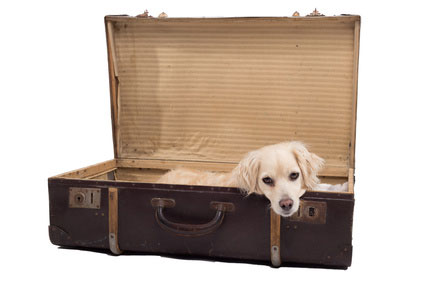Manchmal ist es nicht möglich, dass der Hund mit in den Urlaub fährt, dann bleibt als Alternative nur eine gute Hundepension.