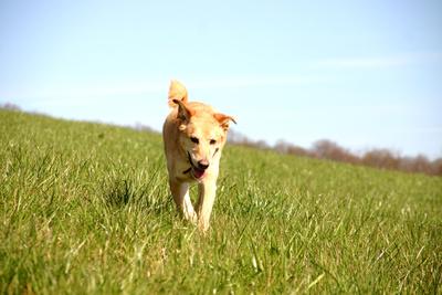 Vollzeitjob und Hund lassen sich für viele Menschen mit einem Hundesitter besser unter einen Hut bringen.