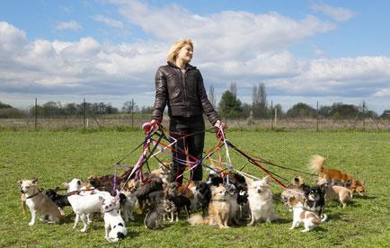 Den geeigneten Hundesitter zu finden, ist manchmal gar nicht so einfach.