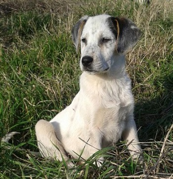 Auch  Mischlingswelpen sollten idealerweise die ersten zwei Monate bei der Hundemutter verbracht haben.