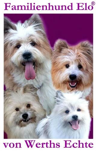 Elo Familienhund Hunderasse Therapie Assistenz Service02