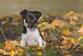 Sollte man einen Hundewelpen lieber vom Züchter kaufen oder im Tierheim?