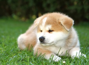 Wer einen Hundewelpen kaufen will, muss ich im Klaren darüber sein, dass der Hund auch 12 Jahre und älter wird.