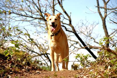 Was darf ein Hundesitter kosten?