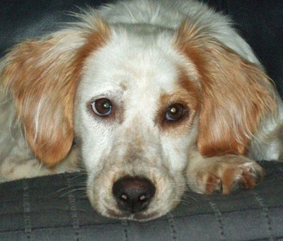 Aus der Mittelmeerregion kommen besonders viele Hunde in Not, die auch Niemandshunde genannt werden.