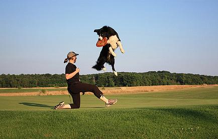 Auf einem Hundesportplatz kann man neben dem Agility Training natürlich noch andere Hundesportarten wie z.B. Discdogging ausüben.