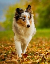 Dem Kauf eines Hundes sollten tiefgehende Überlegungen  vorangehen