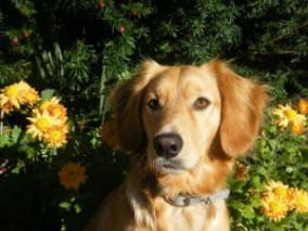 Wer einen Hund kaufen will, sollte auch einmal ein Tierheim besuchen und sich die Lieblinge dort ansehen.
