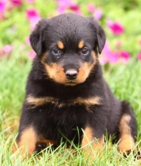 Ein verantwortungsvoller Hundezüchter versucht die Bedürfniss des zukünftigen Hundehalters genau zu ergründen.