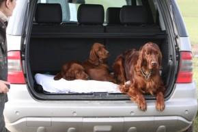 Der verantwortungsvolle Hundezüchter weiß über bestimmte rassetypische Krankheiten Bescheid.
