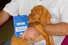 EU Heimtierausweis für den Hund