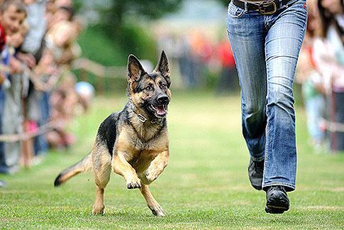 Gute Sozialisation in der Hundeerziehung