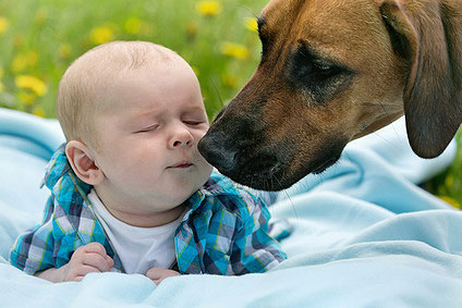 Der Familienhund sollte bei der Ankunft eines Babys auf keinen Fall vernachlässigt werden.