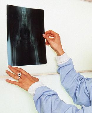 Röntgenaufnahme - Diagnose HD beim Hund