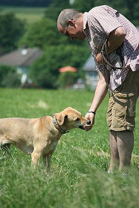 Erfolgreiche Hundeerziehung ducrh positive Verstärkung