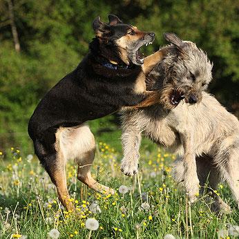 Gewalt in der Hundeerziehung lässt Problemhunde entstehen.