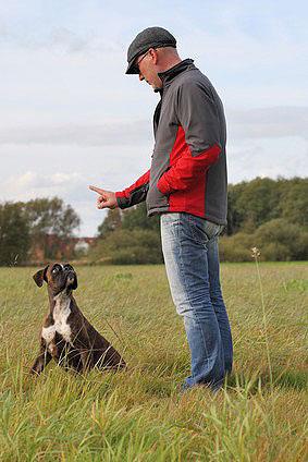 Jeder Hund braucht einen Rudelführer, der ihm die Rangordnung klar macht.