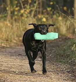 Beim Dummytraining muss sich der Hund die Fallstellen des Dummys genau merken.