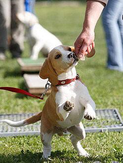 Mit Belohnungsleckerli macht Hundesport noch mehr Spass.