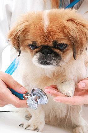 Wie erkenne ich, dass mein Hund krank ist?
