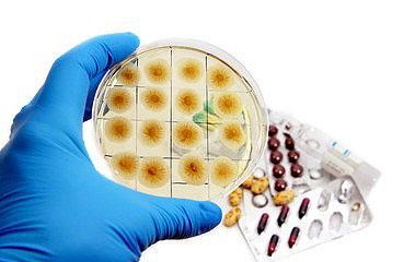 Auch Antibiotika kommen gegen die Leishmaniose zum Einsatz