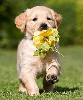 Junge Hunde sind besonders anfällig für den Parvovirose Virus
