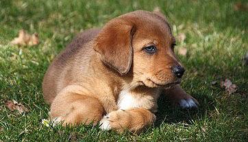 Mischlingshunde können eine robustere Gesundheit aufweisen.