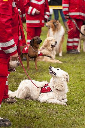 Auch als Therapie- und Rettungshunde sind Mischlinsghunde gut geeignet.
