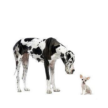 Die Anzahl an kleinen und großen Hunderassen wird auf über achthundert geschätzt