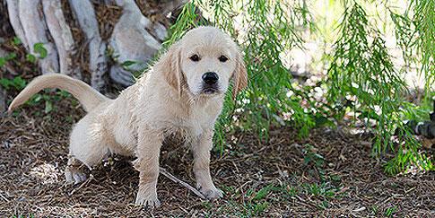 Hundeerziehung - Welpen stubenrein
