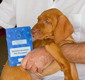 Der Mehrjahresschutz gegen Tollwut sollte im Impfpass eingetragen werden