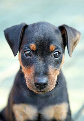 Hunde sind treu und in aller Regel ihrem Besitzer gegenüber absolut loyal.