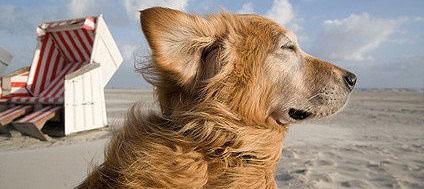 Sowohl Holland, als auch Dänemark eignen sich gut für den Urlaub mit Hund
