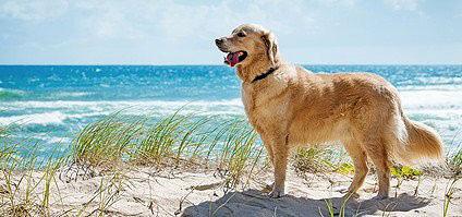 Auch für den Hund bedeutet Urlaub am Meer eine große Erholung.