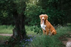 Der Sommer ist die beste Reisezeit für einen Urlaub mit Hund in Dänemark.