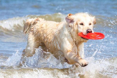 Bade-Urlaub mit Hund in Dänemark macht viel Spaß.
