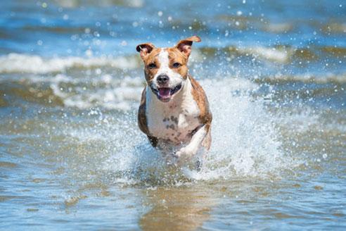 Am Wasser ist es im Urlaub mit Hund am Schönsten.