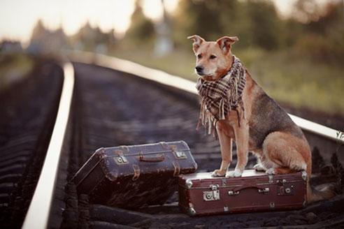 Wenn man den Hund in Bus, Zug oder Bahn in Frankreich transportieren will, gilt es Einiges zu beachten.