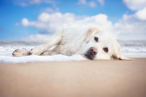 Um einen schönen Urlaub mit Hund in Frankreich zu verbringen, sollte man auch die Einreisebestimmungen beachten.