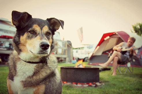Bei einem Urlaub mit Hund in Holland ist es ideal, auf Campingplätzen zu übernachten.