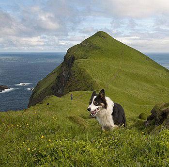 In Nordeuropa ist das Ansteckungsrisiko durch Krankheiten wie Leishmaniose geringer bzw. nicht vorhanden. - Urlaub mit Hund in Irland