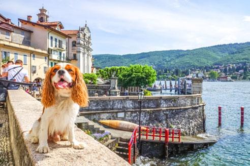 Damit der Urlaub mit Hund in Italien ein schönes Erlebnis wird, gilt es Einiges zu beachten.