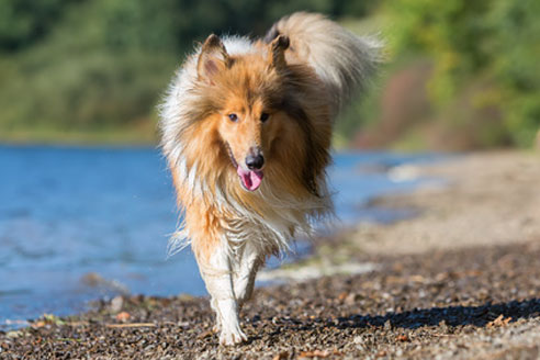 Einen Urlaub mit Hund in Österreich kann man auch sehr gut an einem der vielen Seen verbringen.
