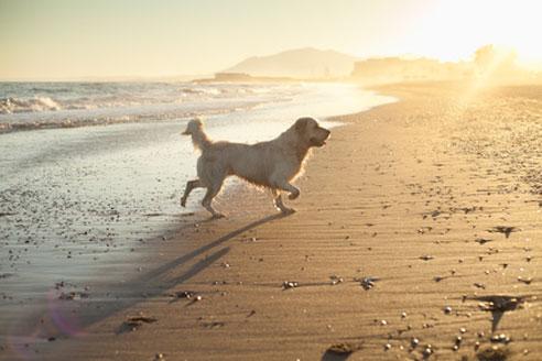 Vor dem Urlaub mit Hund in Spanien ist eine gute Vorbereitung angesagt, denn nicht überall sind Hunde willkommen.