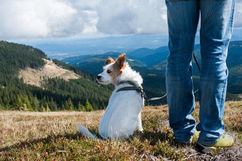 Wer einen Wanderurlaub mit Hund in Deutschland macht, findet gerade in den Alpen und Mittelgebirgen viele preisgünstige Pensionen.